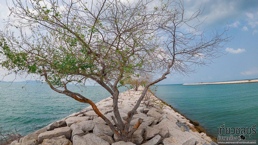 หาดบ้านอำเภอ-หาดเงียบสงบที่น่าไปถ่ายรูปในสัตหีบ-7